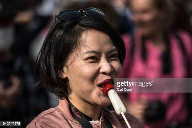 A woman eats a phallicshaped lollipop during Kanamara Matsuri on April 1 2018 in Kawasaki Japan The Kanamara Festival is held annually on the first...