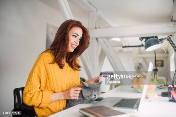 woman electronic banking and petting a cat - undomesticated cat stock pictures, royalty-free photos & images