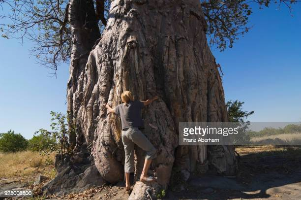 woman embracing a baobab tree, savuti, chobe national park, botswana - franz aberham foto e immagini stock