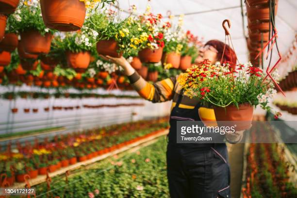 woman enjoys with her flowers - hanging basket stock pictures, royalty-free photos & images