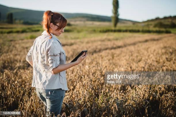 woman examining in the field - cena não urbana imagens e fotografias de stock