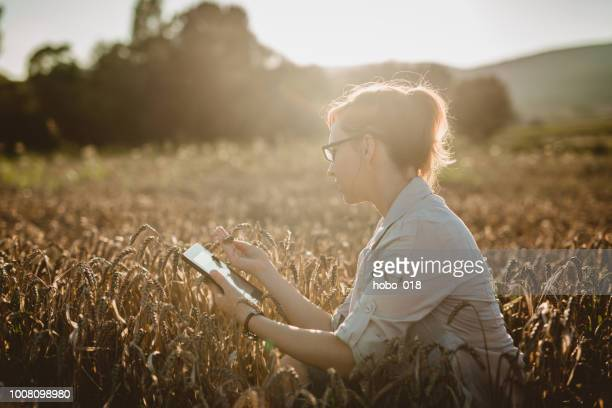 woman examining in the field - agronomist stock pictures, royalty-free photos & images
