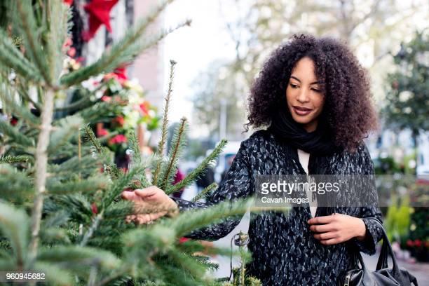 Woman examining pine trees in market