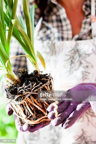 Woman examining plant roots outdoors