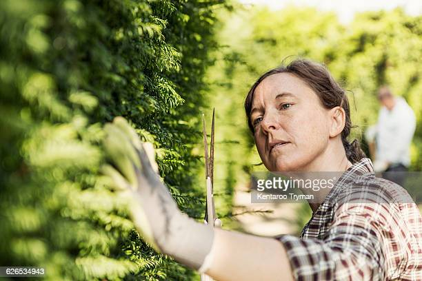 woman examining plants at community garden - pruning shears stock photos and pictures
