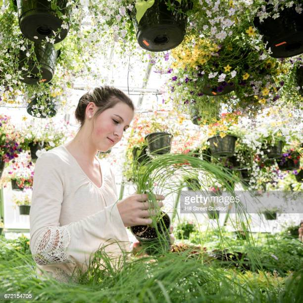 Woman examining potted plant in greenhouse