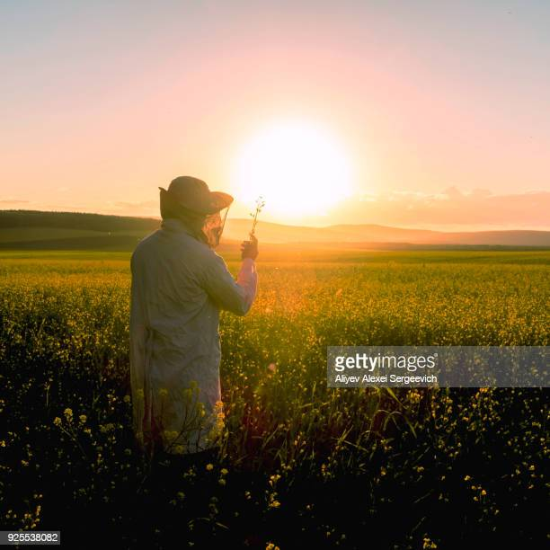 woman examining wildflowers in field at sunset - botanist stock pictures, royalty-free photos & images