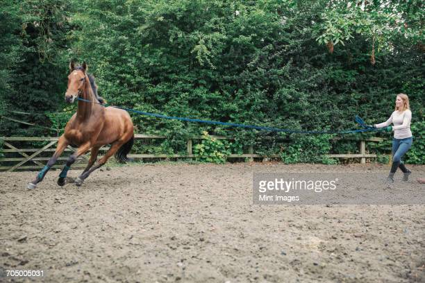 Woman exercising a brown horse in a paddock.