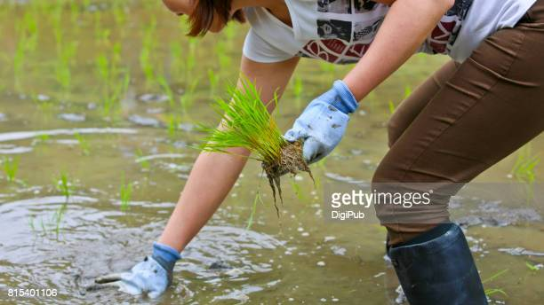 woman experiences rice planting for the very first time - ブーツイン ストックフォトと画像