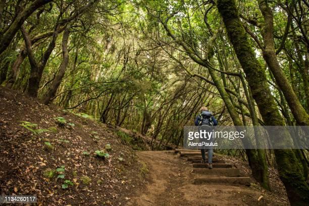 mujer explorando un hermoso bosque verde - isla de tenerife fotografías e imágenes de stock