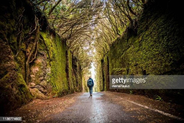 mujer explorando el camino del túnel del bosque de laurel verde - isla de tenerife fotografías e imágenes de stock