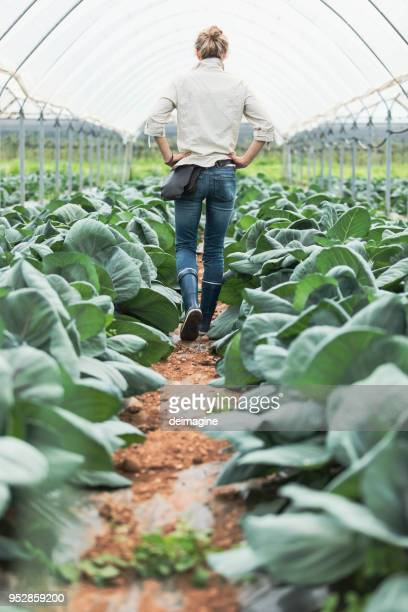 woman farmer in greenhouse - farm woman stock pictures, royalty-free photos & images