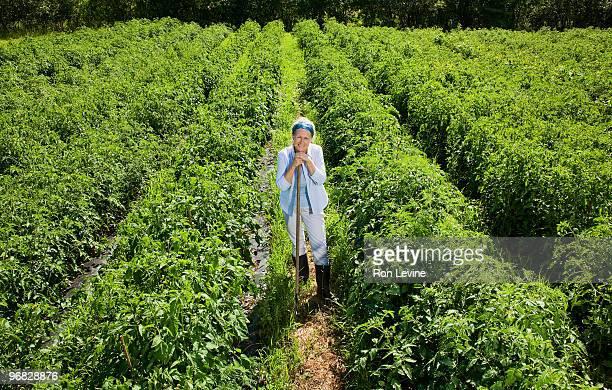 Woman farmer leaning on rake in field of tomatoes