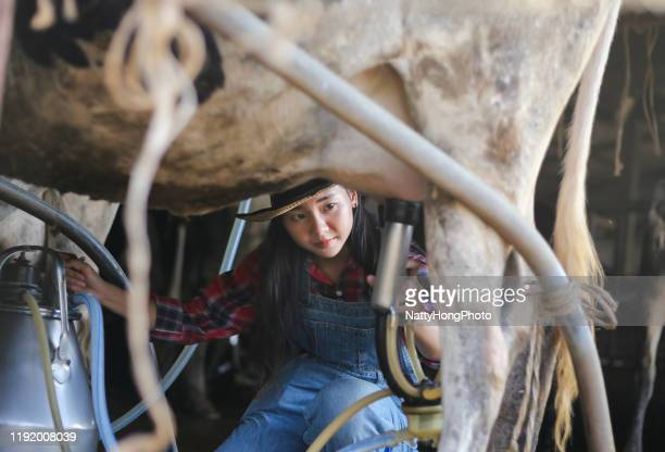 woman farmer milking a cow in a village.asian women farming and agriculture industry and animal husbandry concept - female animal stock pictures, royalty-free photos & images