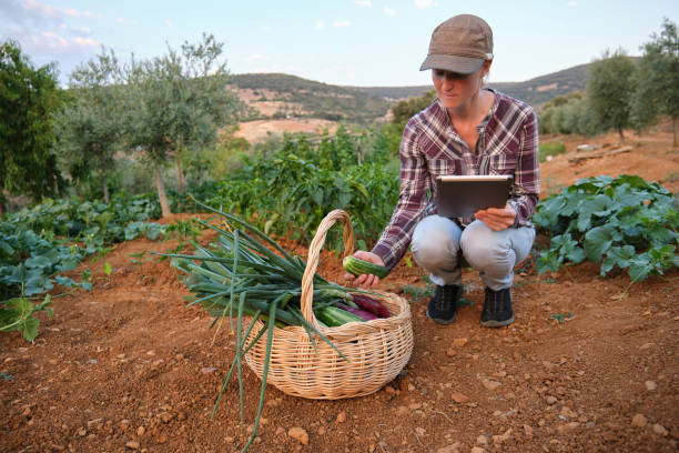Woman farmer using a digital tablet in her vegetable garden. Smart technology in farming concepts.