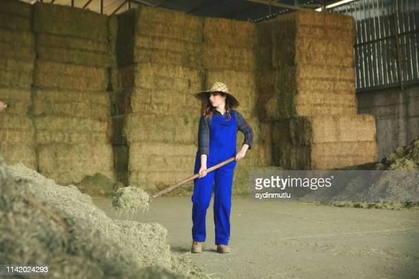 donna contadina che lavora con la forchetta di fieno - allevamento foto e immagini stock