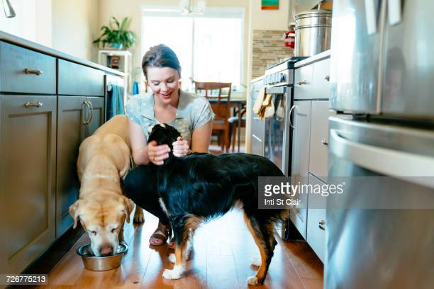 woman feeding and petting dogs in domestic kitchen - dog eating stock photos and pictures