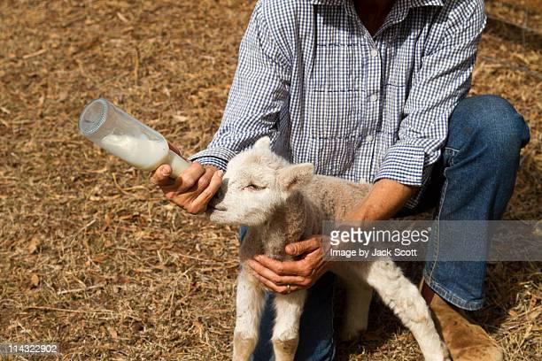 Woman feeding baby lamb