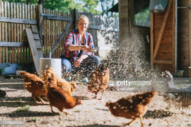 Woman feeding chicken with seed on her farm.