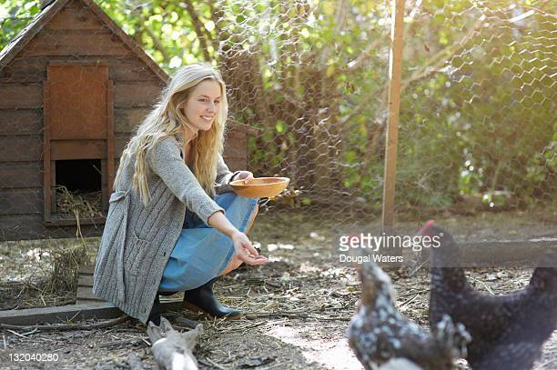 woman feeding chickens in chicken run. - chicken coop stock pictures, royalty-free photos & images