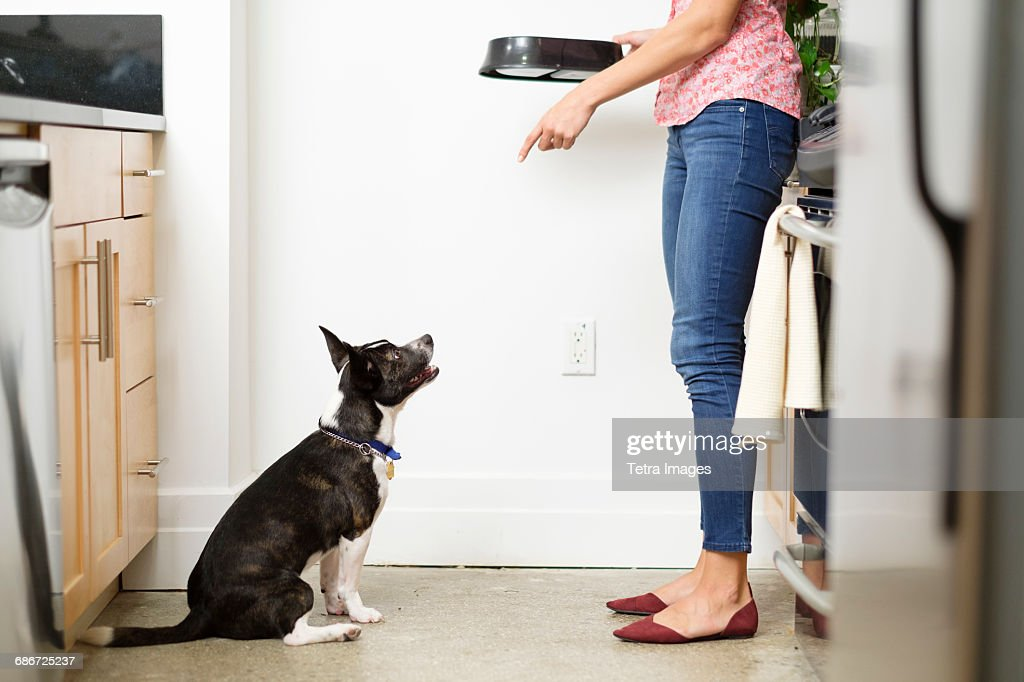 Woman feeding dog in kitchen : Foto de stock