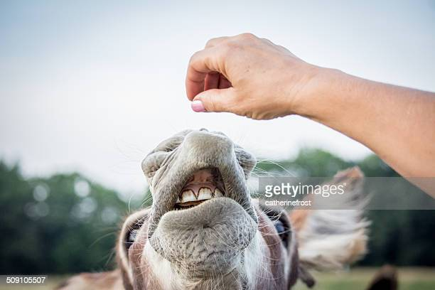 Woman feeding donkey
