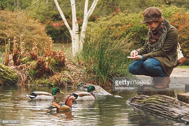Woman Feeding Ducks Swimming In Pond