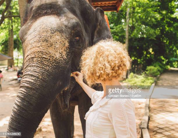 woman feeding elephant in forest - bortes stock pictures, royalty-free photos & images