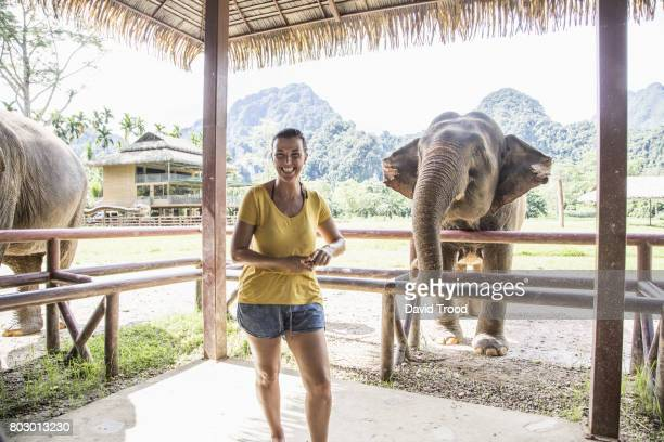 woman feeding elephant - kao sok national park stock pictures, royalty-free photos & images