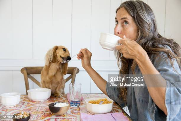 woman feeding her dog breakfast from the table like a baby - routine stock-fotos und bilder