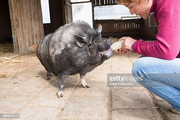 Woman feeding pig with bottle, Bavaria, Germany