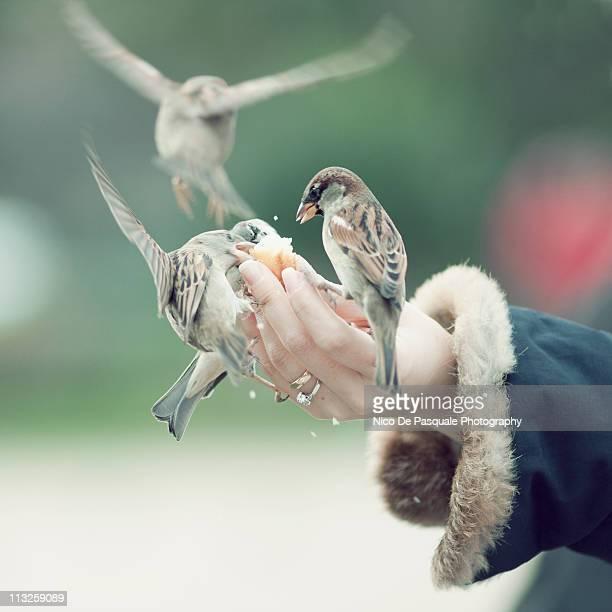 Woman feeding sparrows