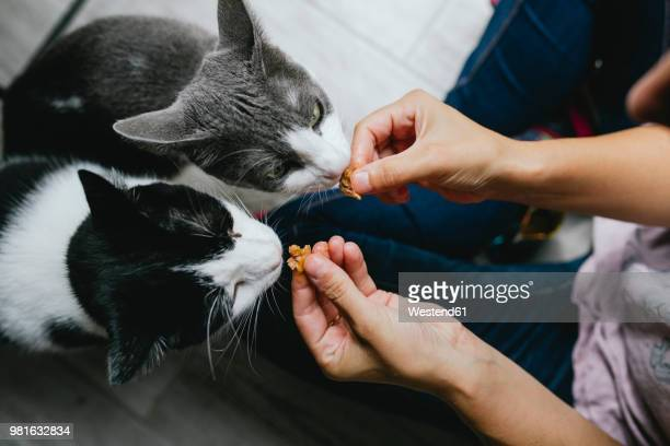 woman feeding two cats at home - feeding stock pictures, royalty-free photos & images