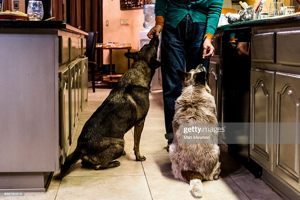 A woman feeding two dogs scraps of food. : Stock Photo