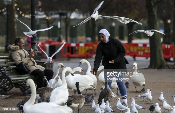 A woman feeds animals at Hyde Park during the last days of autumn on October 28 2017 in London England