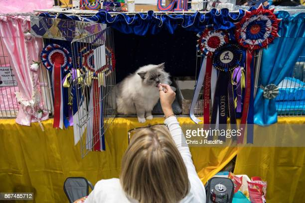 A woman feeds her cat treats it is cage during the Supreme Cat Show on October 28 2017 in Birmingham England The oneday Supreme Cat Show is one of...