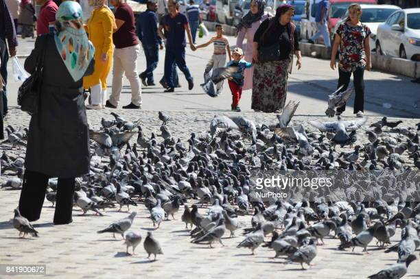 A woman feeds pigeons as people enjoy their holiday by visiting the Haci Bayrami Veli Mosque and its around on the second day of Muslims' sacrificial...