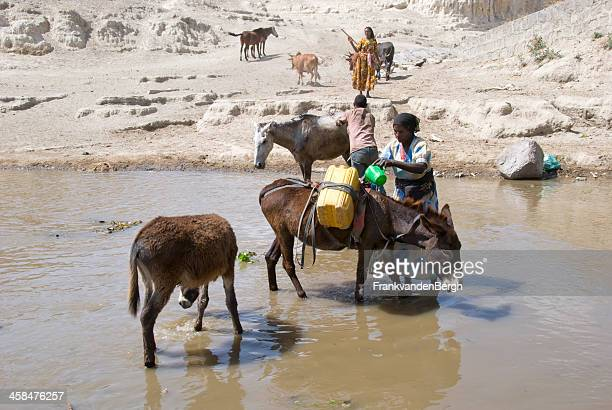 woman filling jerrycans tied on the back of a donkey - jackass images stock pictures, royalty-free photos & images