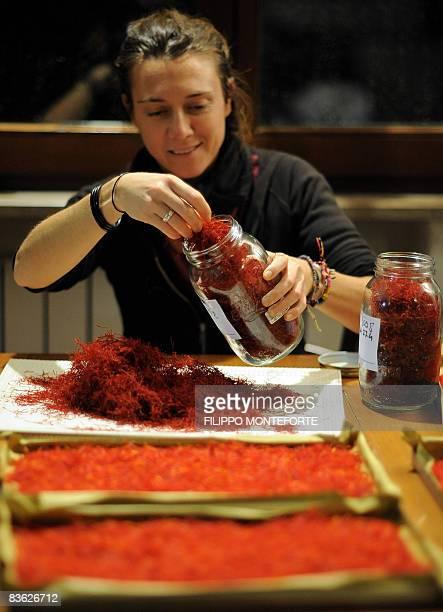 A woman fills dried stigmas of Crocus Sativus the saffron crocus in a pot during the saffron harvest near the village of San Gimignano on November 4...