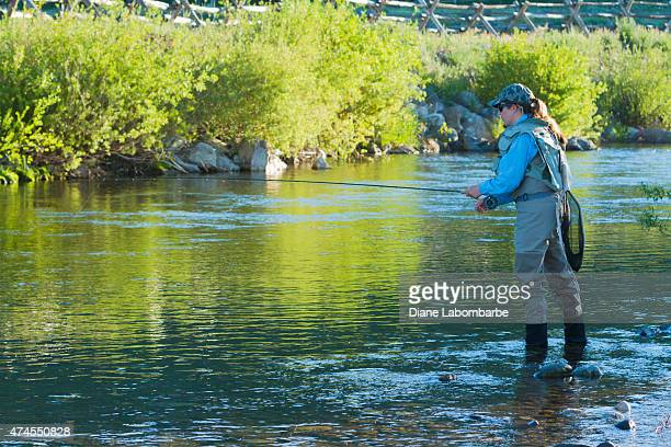 Woman Fly Fishing In A Yellowstone Creek