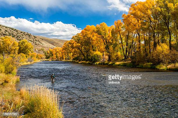 Woman Fly-Fishing in the Colorado River During Fall