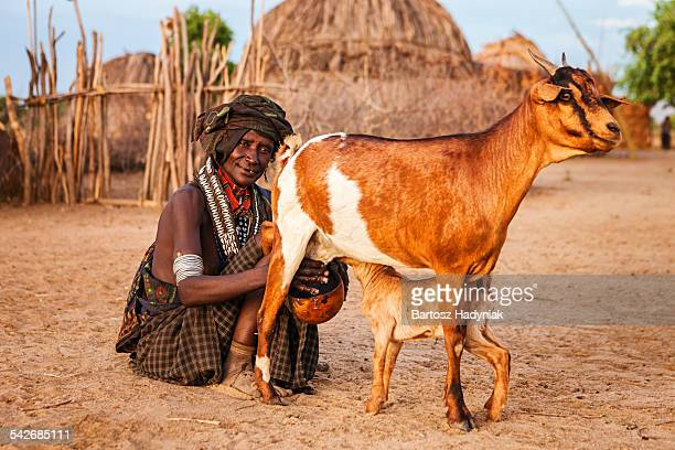 woman from arbore tribe milking a goat - man milking woman stock photos and pictures