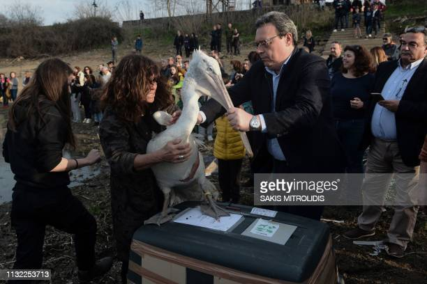 Woman from National Park Management Agency of lake Kerkini and Deputy Minister of Environment and Energy Socrates Famellos hold a Dalmatian pelican...