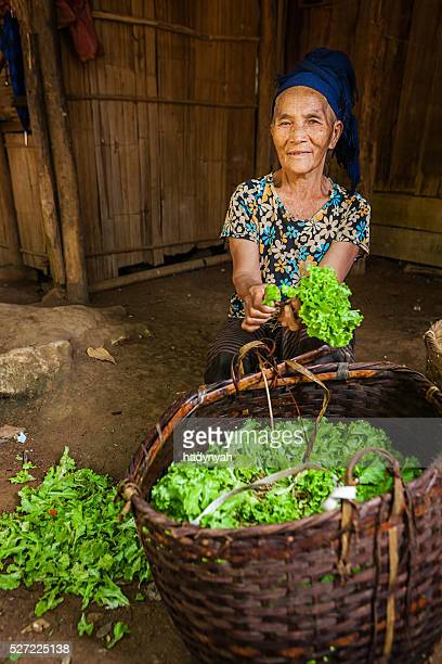 Woman from the hill tribe cleaning lettuce