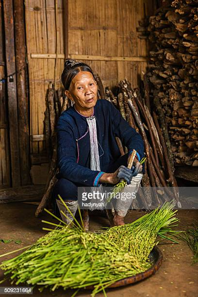 Woman from the Lantan hill tribe harvesting a rice