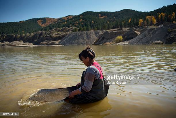 Woman from the Sharylgol district of Mongolia, sits on the shallow surface of a lake to pan for a few grams of gold. Mongolia today is known for its...