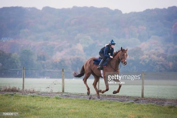 woman galloping on a thoroughbred race horse along a path through a field. - racehorse stock-fotos und bilder