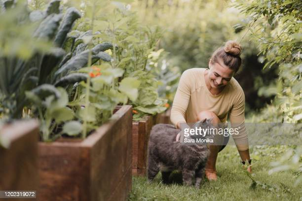 woman gardener with cat in garden - domestic animals stock pictures, royalty-free photos & images