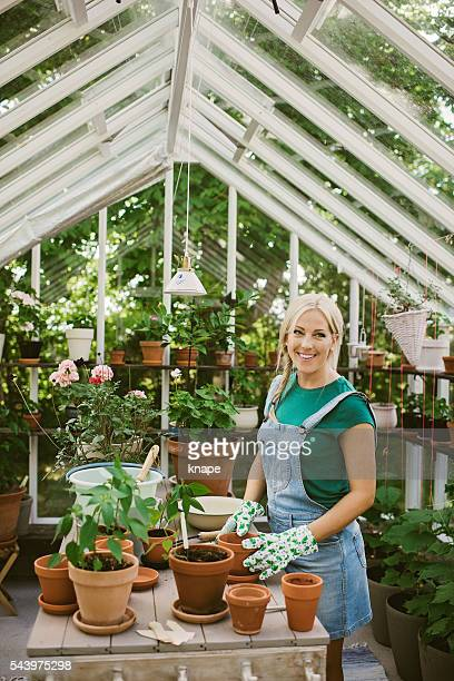 Woman gardening in greenhouse replanting plant