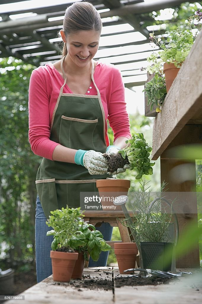 Woman gardening : Stock Photo